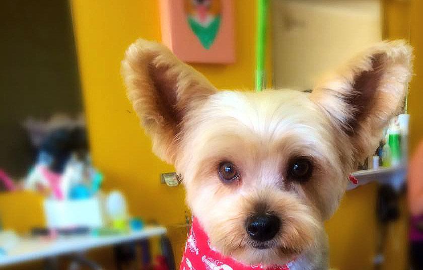 Dog groomer Kelowna